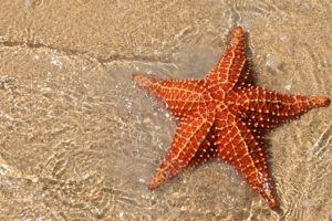 Starfish Class Class Photo