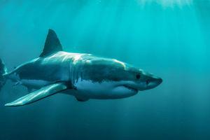 Shark Class Class Photo