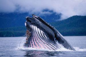 Whale Class Class Photo