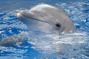 Dolphin Class Class Photo