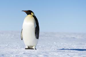 Penguin Class Class Photo