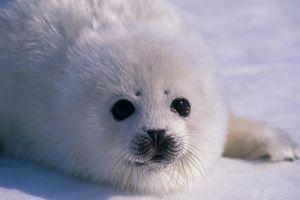 Seal Class Class Photo