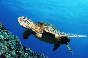 Turtle Class Class Photo